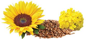 Hundefutter-Sonnenblumen-Kolza-Flachsoel-Omega-Fettsaeuren