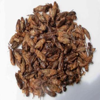 Knusprige Grillen - Oriental Mix